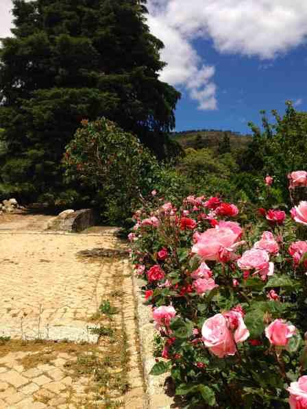 Roseiras28Maio2