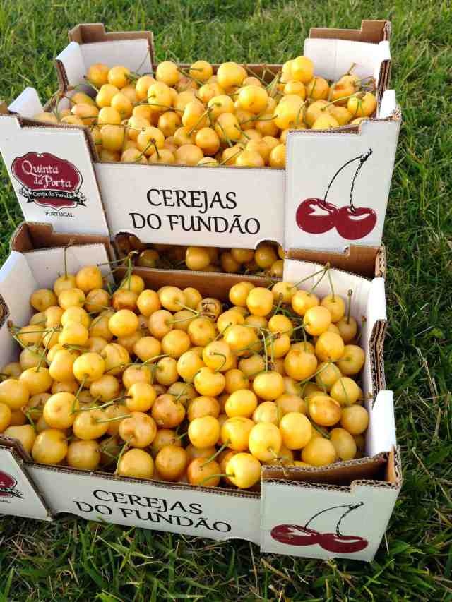 cerejas-amarelas-1