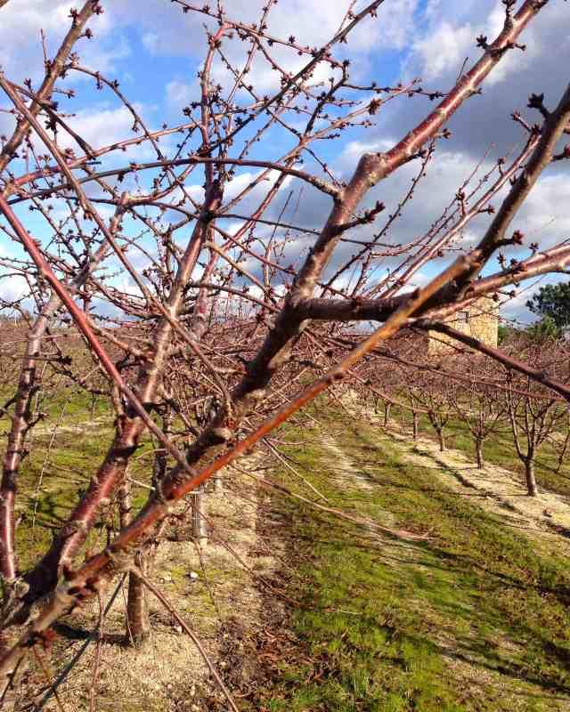 Cerejeirasfimjaneiro