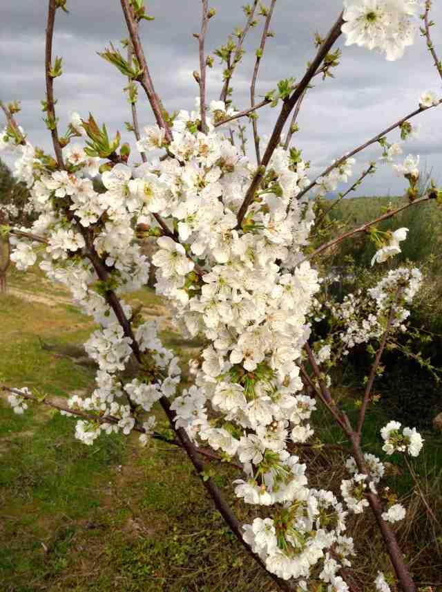 bouquet-14-03-20