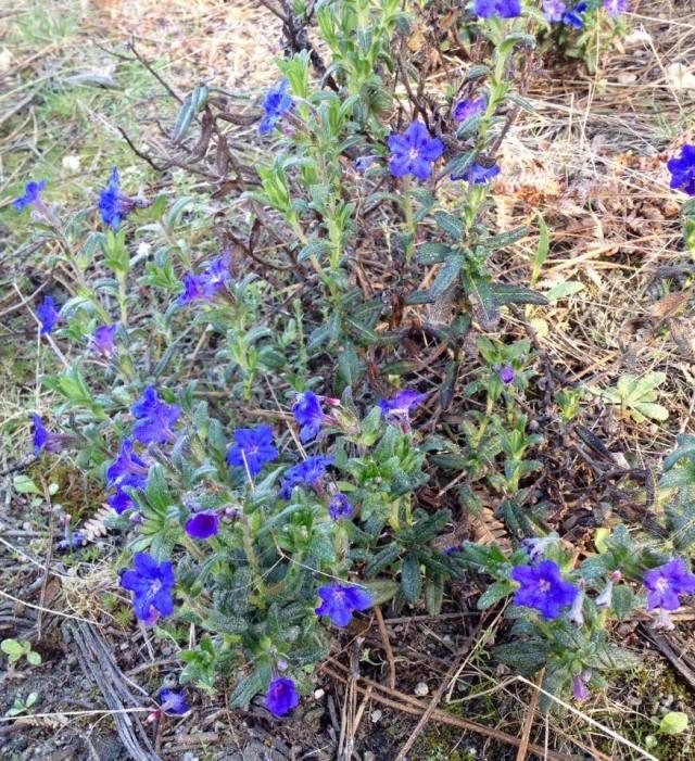 flores1-abril14