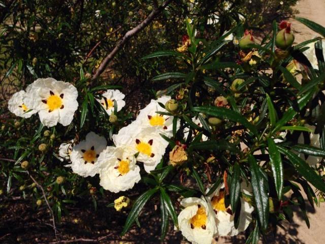 flores2-abril14