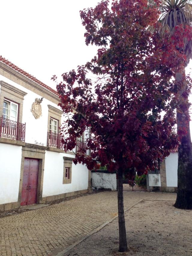 Casa VP 2014 Outono
