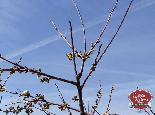 Cerejeiras borboleta 12Mar2015 2 logo