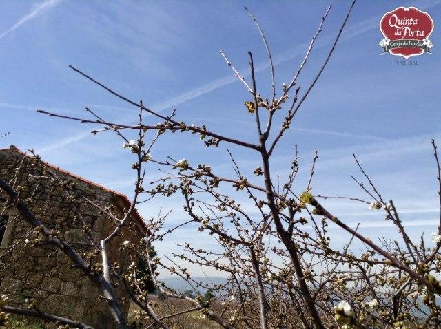 Cerejeiras borboleta 12Mar2015 3 logo
