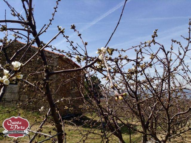 Cerejeiras borboleta 12Mar2015 4 logo