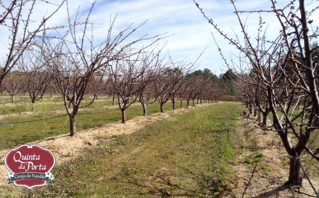 Cerejeiras PG abrolhamento 12Mar2015 1 logo
