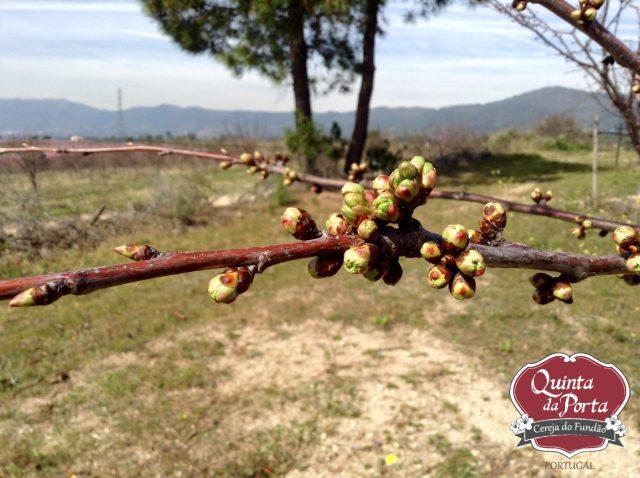 Cerejeiras PG abrolhamento 12Mar2015 2 logo