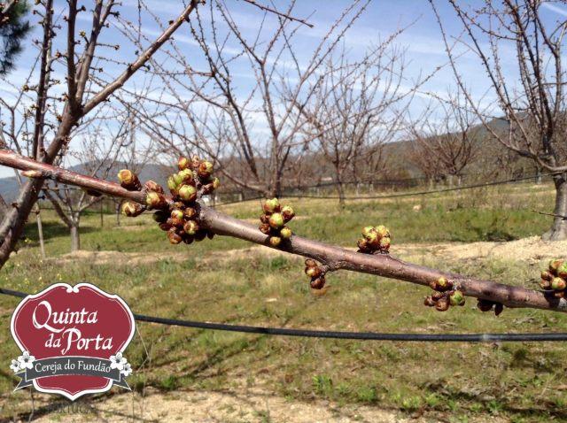 Cerejeiras PG abrolhamento 12Mar2015 3 logo