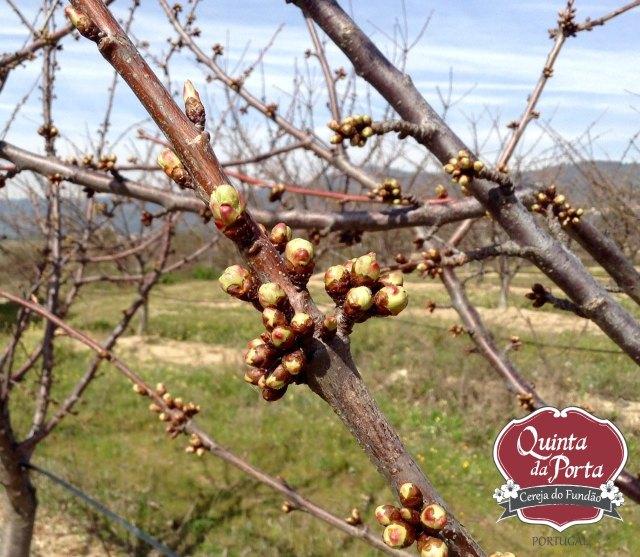 Cerejeiras PG abrolhamento 12Mar2015 4 logo