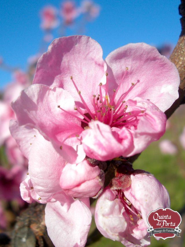 Flores nectarinas alto logo