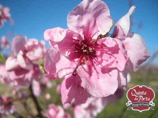 Flores nectarinas logo