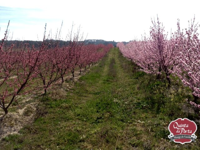 Pessegueiros em flor compal 12Mar2015 6 logo