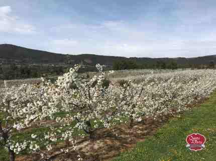 Flor-Cer-QVP-200313